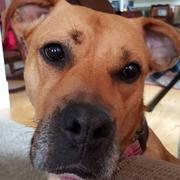 Sarah C. - Klamath Falls Pet Care Provider