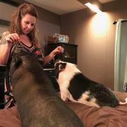 Carrie H. - Crossville Pet Care Provider