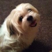 Raini S. - Fort Wayne Pet Care Provider