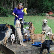 Bobbi P., Pet Care Provider in Cramerton, NC 28032 with 13 years paid experience