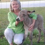 Cynthia H. - Wadley Pet Care Provider