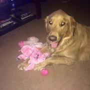 Cardin B. - Antioch Pet Care Provider