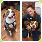 Raya B. - Oceano Pet Care Provider