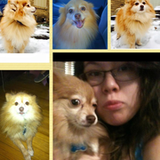 Ana F., Pet Care Provider in Dallas, TX 75235 with 1 year paid experience