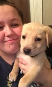 Brianna D. - Herrin Pet Care Provider