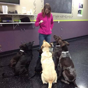Meagan Y. - Romeo Pet Care Provider