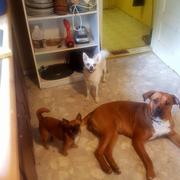 Cynthia S. - Marietta Pet Care Provider