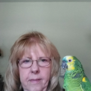 Nancy C., Pet Care Provider in Hyde Park, NY with 1 year paid experience